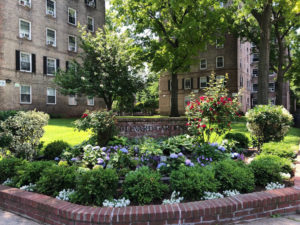 planted garden area in front of apartment buildings trout lily garden design white plains ny