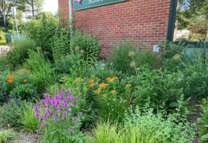 pollinator garden in front of day care school trout lily garden design chappaqua ny