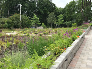 large public area with plantings trout lily garden design greenwich ct