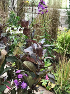 mixed pollinator garden plantings trout lily garden design westchester ny