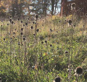 field of grasses and brown autumn daisies trout lily garden design katonah ny