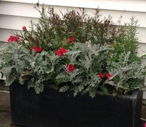 late summer flower arrangement in flower box trout lily garden design westchester ny