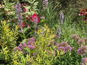 summer wildflowers trout lily garden design westchesterny