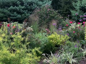 pollinator garden trout lily garden design pound ridge ny