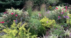 english flower garden trout lily garden design bedford hills ny
