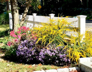 plantings with yellow purple and pink flowers trout lily garden design old greenwich ct