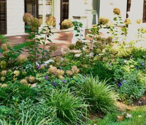 hydrangeas and grasses in fall trout lily garden design pound ridge ny