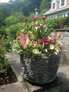 spring flowers in large patio urn trout lily garden design greenwich ct