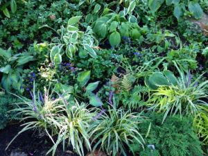 residential garden design trout lily garden design mount kisco westchester county ny