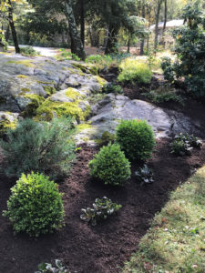 residential garden with boulders trout lily garden design bedford hills ny