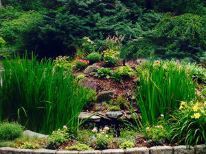 terraced plantings and wild grasses tiered public garden trout lily garden design bedford westchester ny