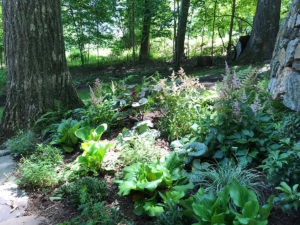 green leafy plants and pink flowers along wooded path tiered public garden trout lily garden design bedford westchester ny