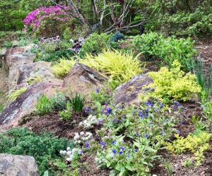 flowers and plants among boulders tiered public garden trout lily garden design greenwich ct