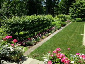 rose bushes and other green shrubs in backyard tiered public garden trout lily garden design mount kisco westchester ny
