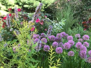 flowers in pollinator garden trout lily garden design greenwich ct